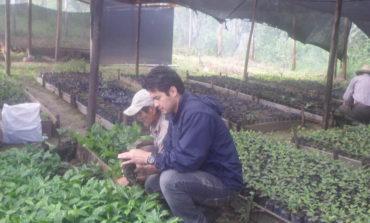 Proyecto Reactivación de la Caficultura